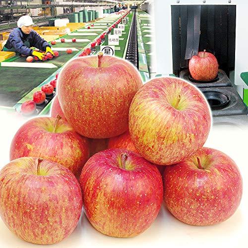国華園 食品 りんご 青森産 高糖度サンふじ 10kg 1箱