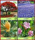 Semillas Semillas BloomGreen Co. Jardín Combo árbol: Jacaranda, Delonix regia, Michelia Champaca, Karavira árbol de la flor del jardín de cocina Paquete