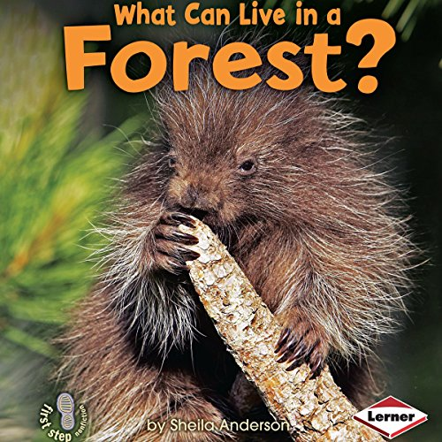 What Can Live in a Forest? copertina