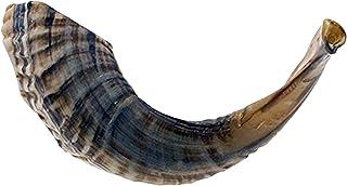 "KOSHER ODORLESS SHOFAR طبیعی   Geneine Rams Horn   قطعه صاف برای دمیدن آسان   شامل مخمل مانند کیف بسته بند و کیف دمنده شوفر (12 ""-14"")"