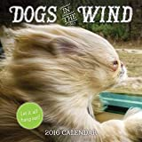 2016 Dogs in the Wind Wall Calendar