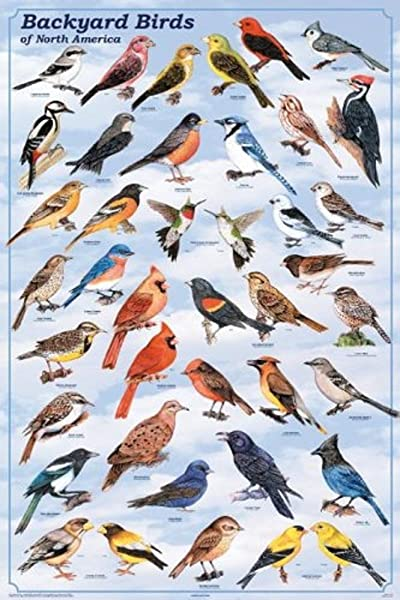 Laminated Backyard Birds Educational Chart Print Poster 24x36