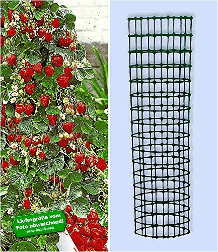 BALDUR-Garten Kletter-Erdbeere 'Hummi®' und Dekorativer Rankturm;1 Set