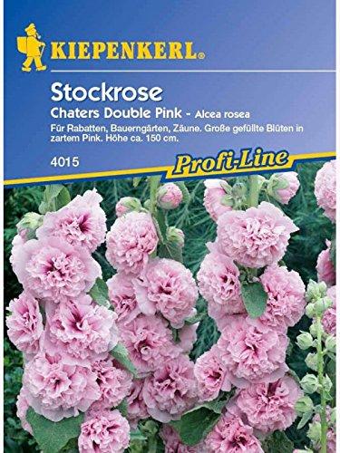 Kiepenkerl Alcea rosea Chaters Double Pink