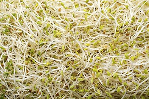 Germination des graines - Luzerne - 100 g