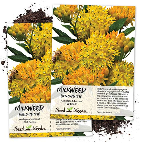 Seed Needs, Hello Yellow Milkweed (Asclepias...