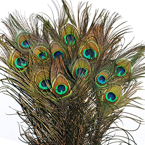BELLE VOUS Plumas de Pavo Real Natural (Pack de 20) 78 – 80 cm - Plumas Manualidades Largas para Bodas, Fiestas, Festividades y Decoraciones para el Hogar
