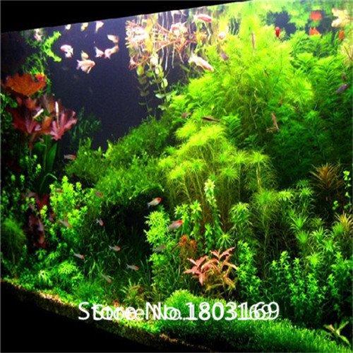 2016 500 Stück Aquarium Grassamen (mix) Wasser Wassergrassamen (15 Arten) home Hydroponik Pflanzensamen MixColors