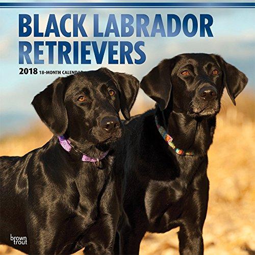 Black Labrador Retrievers - Schwarze Labradore 2018 - 18-Monatskalender mit freier DogDays-App: Orig