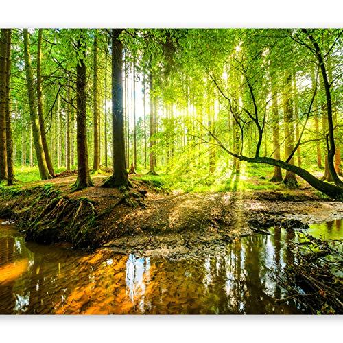 murando Fototapete Wald 350x256 cm Vlies Tapeten Wandtapete XXL Moderne Wanddeko Design Wand Dekoration Wohnzimmer Schlafzimmer Büro Flur Natur Baum grün Landschaft Sonne c-B-0241-a-a