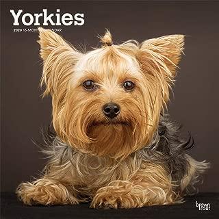 Best yorkie online store Reviews