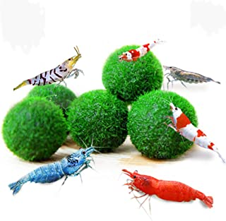 Luffy Shrimp Balls – Instantly Purify Water for Shrimps: Beautiful & Easy Live..