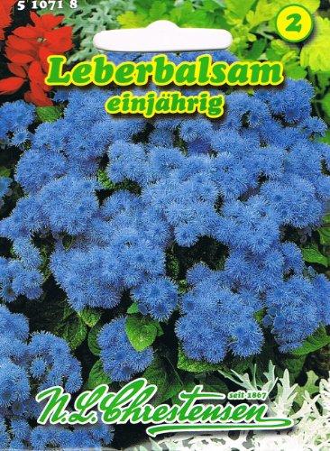 Leberbalsam einjährig, Dauerblüher, für Beet-, Rabatten-, Grab- und Balkonbepflanzung (Ageratum houstonianum)