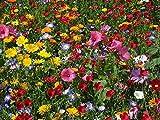 Soteer Seed House - 50pcs Mélange de fleurs rares papillon graine de fleurs sauvages et amical mélange d'abeilles de fleurs de prairie graine vivace vivace