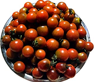 15+ ORGANICALLY GROWN Merlot Cherry Tomato Seeds, Heirloom NON-GMO, Candy Sweet and Heavy-Yielding, Semi-determinate, Open-Pollinated, Long Season, Delicious, From USA