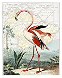 Beautiful Pink Flamingo 8x10 Fine Art Print (Original 1800's Illustration) Overlaid on a Reproduction Map of South America. Size: 8x10 Inches (BF1Map810)