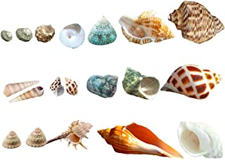 Luckybaby Shell Hermit Crab Shells Medium Small Mini Turbo Seashell Natural Sea Conch 1/4-1 1/2 Inch 15+ pcs