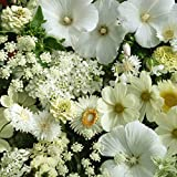 Outsidepride White Wild Flower Seed Mix - 5000 Seeds