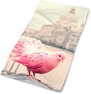 Best pigeon head band Reviews