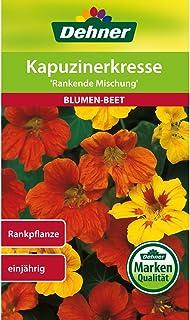 Dehner Blumen-Saatgut, Kapuzinerkresse Rankende Mischung, 5er Pack 5 x 6 g