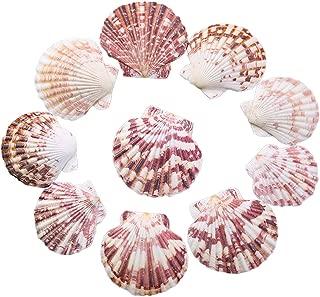 Scallop Shell Natural Seashell from Sea Beach for DIY Craft Decor 1 Box (50 pcs)