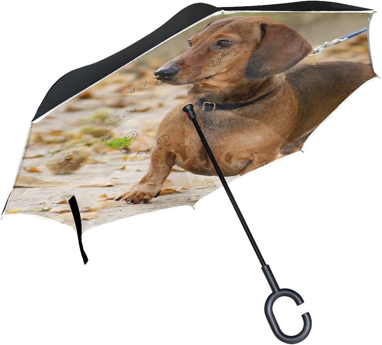 Animal Dog Dachshund Yellow Black Mix Fluffy Small Puppy Ingreened Umbrella Large Double Layer Outdoor Rain Sun Car Reversible Umbrella