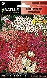 Semillas de Flores - Flox Drumond flor grande variada - Batlle