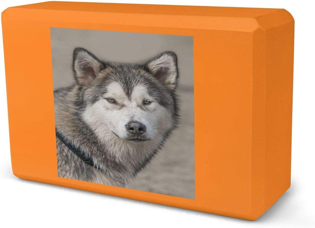IPOXK Yoga Block,Alaskan Malamute Wolf Sale item Some reservation Foam Block,E Dog