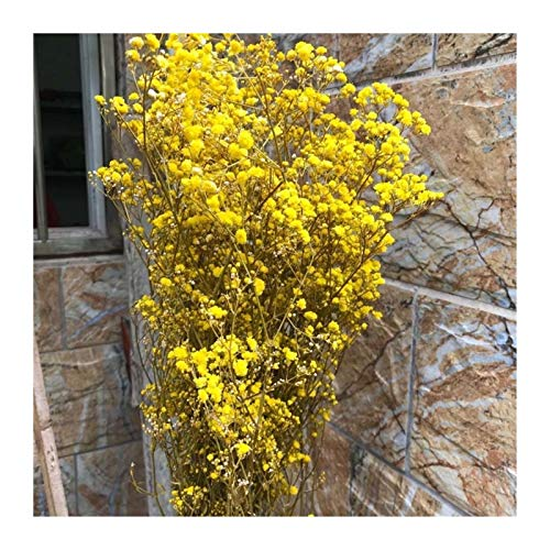 Linyuex Dried Flowers-30-35CM Natural Fresh Dried Preserved Flowers,Real Forever Breath Flower Branch For DIY Eternal Flower Material (Color : Yellow)