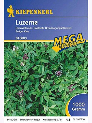 Luzerne Gründünger lose per kg