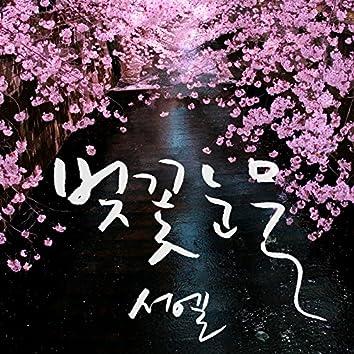벚꽃 눈물