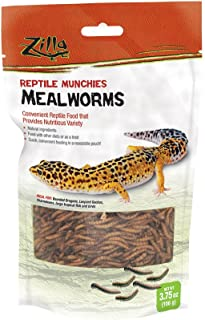 can a bearded dragon eat wax worms
