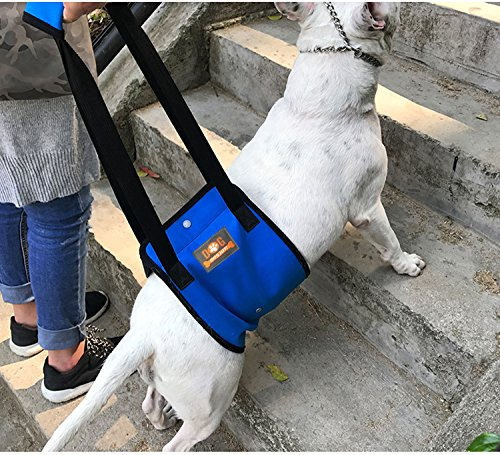 Blue Dog Lift Support Harness with Handle for Canine Older or Injuries Hind Leg-Lifting K9 for Injuries, Arthritis or Joints. Large Breed Assist Sling for Rehabilitation & Stability & Mobility