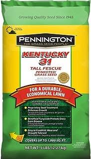 DLF Pennington Seed 100516050 Kentucky 31 Tall Fescue Grass 5 lb Bag