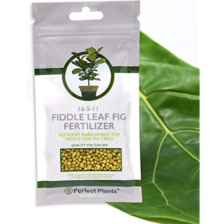 Fiddle Leaf Fig Slow-Release Fertilizer by Perfect Plants - Resealable 5oz. Bag - Consistent Nutrient Enrichment - for Indoor and Outdoor Use on All Ficus Varieties