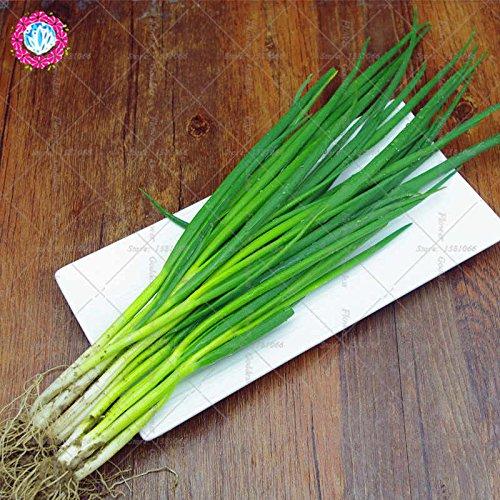 100PCS china verde de la cebolla Semillas Semillas de verduras del jardín de Bonsai planta de semillas de hortalizas china envío