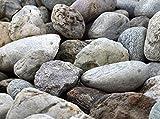 Natur Zier Steine Deko abgerundet bunt Kies Aquarium Terrarium Garten Teich (25 Kg)