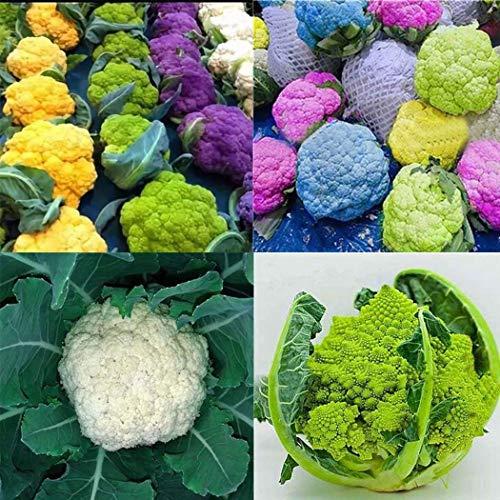Anitra Perkins - 50 Stück 4 Sorten Bio Blumenkohl Samen Brokkoli Gemüsesamen schmackhaft aromatisch ertragreich winterhart für Garten (Mischung)