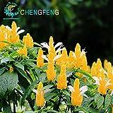 50pcs Weiß Gelb Welt Seltene Samen Pachystachys Lutea Samen leicht Bonsai-Blumen-Anlage für Gartendekoration freies Schiff zu wachsen