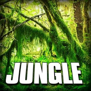 Jungle (Nature Sound)