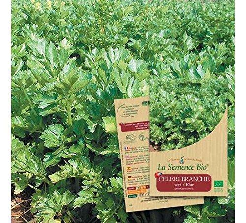 La semence BIO Graines de CELERI Branche Vert d'Elne Bio