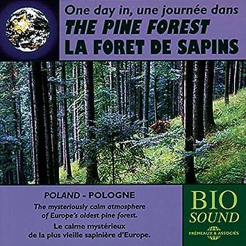 Poland: The Pine Forest - Forêt de sapin en Pologne