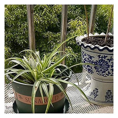 LinLiQiao Valla de seguridad para balcón o balcón, impermeable, valla de malla para balcón, protección de plantas y flores, color blanco, 0,5 x 8 m. (tamaño: 1,2 cm de apertura, color: blanco)