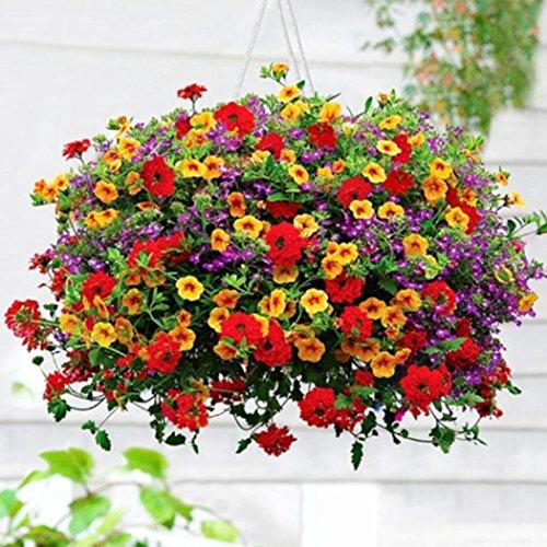 Tasa de crecimiento: rápida Preferencia del sol: luz brillante filtrada Tipo de suelo: cualquier Humedad del suelo: riegue a fondo Contenido del paquete: 1 x paquete de 200 semillas