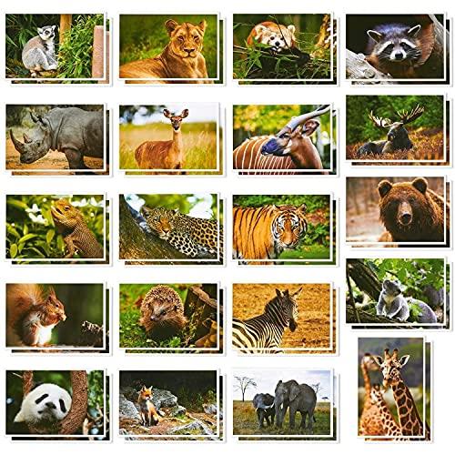 """Postkarten-Set """"Wilde Tiere"""" von Best Paper Greetings (40 Stück) - Beeindruckende Nahaufnahmen u.a. von Löwe, Panda, Zebra, Bär, Elefant, Giraffe - Als Gruß, Danksagung, Einladung - 10 cm x 15 cm"""