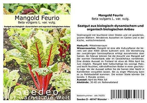 Seedeo® Mangold Feurio (Beta vulgaris L. var. vulg.) 50 Samen BIO