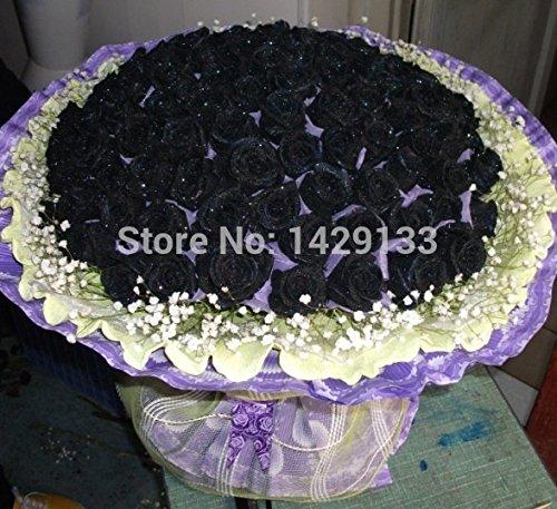 High Quality Easy Seeds Chine Rare Black Rose Fleur de Plante Famille Jardin Graines La rosa negra Semillas