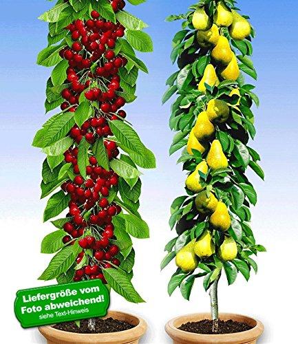 BALDUR Garten Säulenobst-Duo Birne & Kirsche, 2 Pflanzen Birnenbaum Kirschbaum