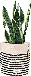 Best floor plant in basket Reviews
