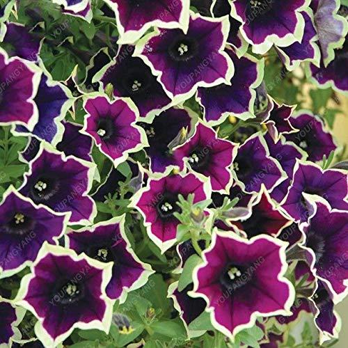 Elitely 100 Samen Petunie Blau Petunie Samen Europa Einzigartige dunkelblaue Blumen Kerzen Samen Bonsai Garten Hof